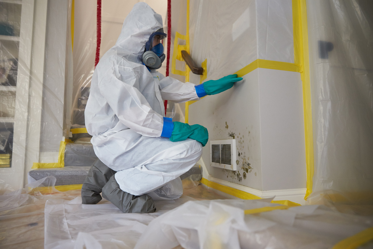 mold damage repair
